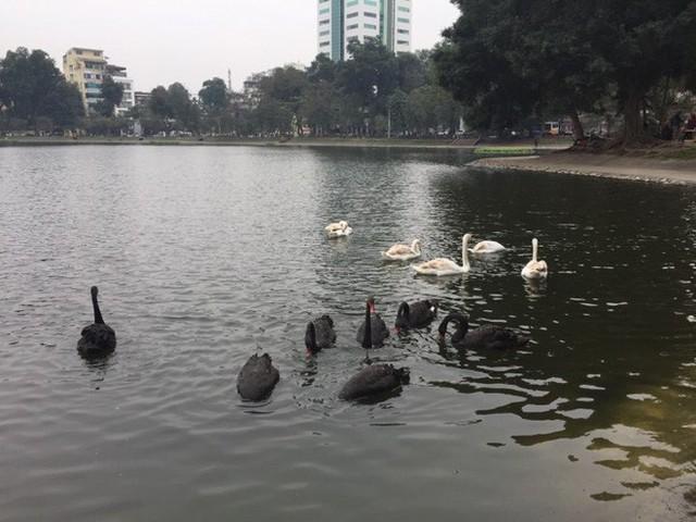 PGS Hà Đình Đức: Họ bảo tôi không làm gì cho Hồ Gươm, khiến rùa chết còn bảo thủ - Ảnh 3.