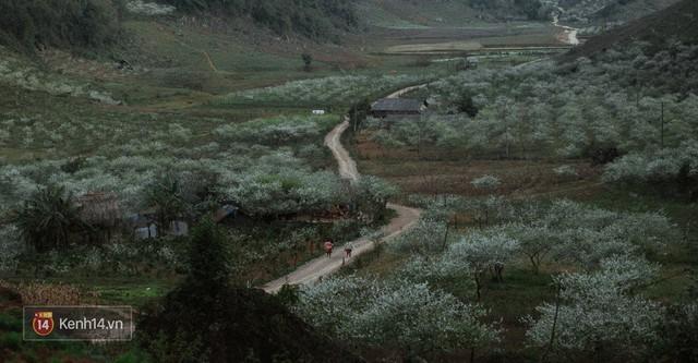 Những ngày cận Tết, hoa mận trắng nở rộ Mộc Châu đẹp đến mê mẩn - Ảnh 17.