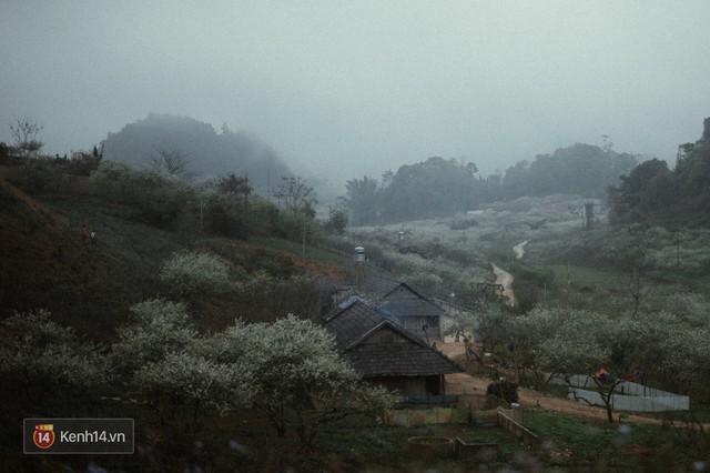 Những ngày cận Tết, hoa mận trắng nở rộ Mộc Châu đẹp đến mê mẩn - Ảnh 18.
