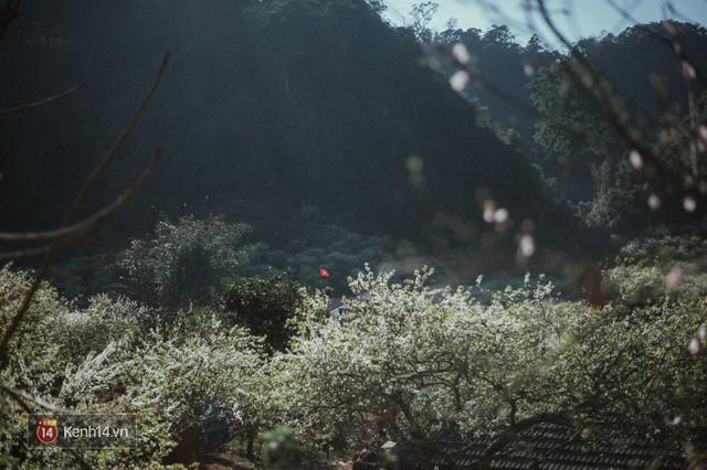 Những ngày cận Tết, hoa mận trắng nở rộ Mộc Châu đẹp đến mê mẩn - Ảnh 19.
