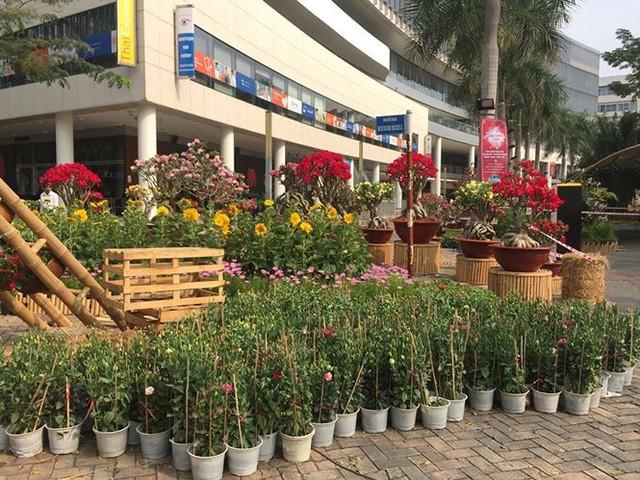 Đường hoa xuân đậm nét quê ở phố nhà giàu Sài Gòn   - Ảnh 7.