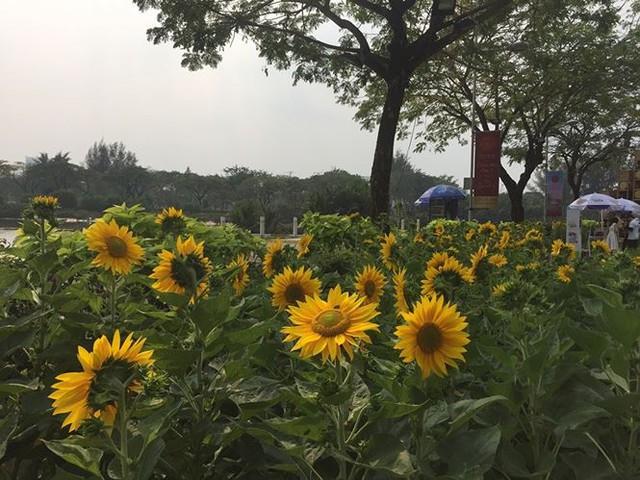 Đường hoa xuân đậm nét quê ở phố nhà giàu Sài Gòn   - Ảnh 9.
