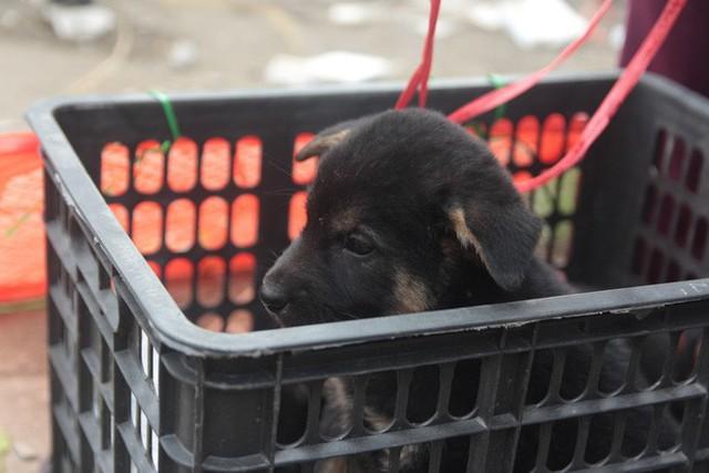 Chợ chó con ở Nghệ An đông vui nhộn nhịp vào ngày 29 Tết - Ảnh 4.