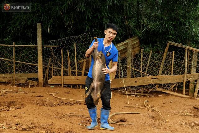 23 tuổi bỏ Đại học, về nhà nuôi lợn rừng kiếm 250 triệu đồng/năm - Ảnh 11.