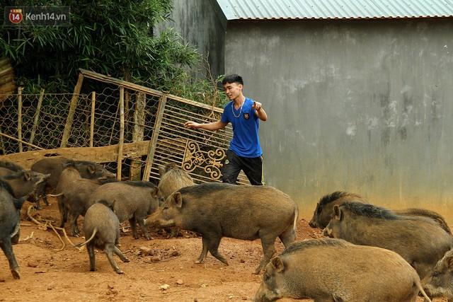 23 tuổi bỏ Đại học, về nhà nuôi lợn rừng kiếm 250 triệu đồng/năm - Ảnh 12.