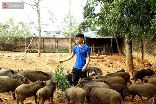 23 tuổi bỏ Đại học, về nhà nuôi lợn rừng kiếm 250 triệu đồng/năm - Ảnh 7.