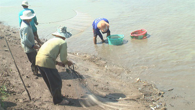Cận cảnh niềm vui thu hoạch tôm càng xanh sau tết được mùa, được giá - Ảnh 7.