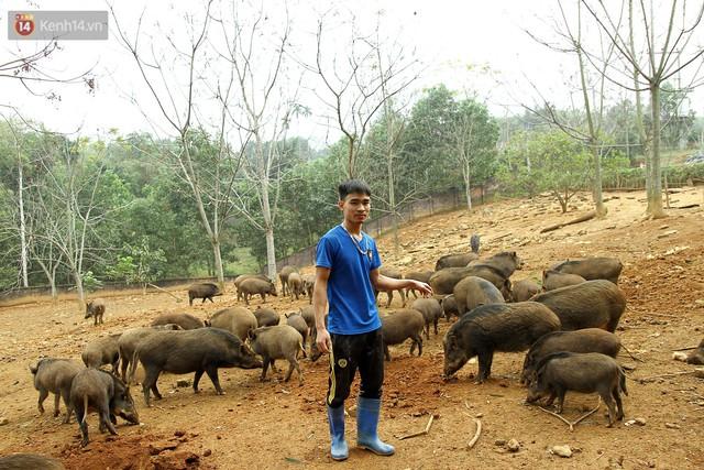 23 tuổi bỏ Đại học, về nhà nuôi lợn rừng kiếm 250 triệu đồng/năm - Ảnh 9.