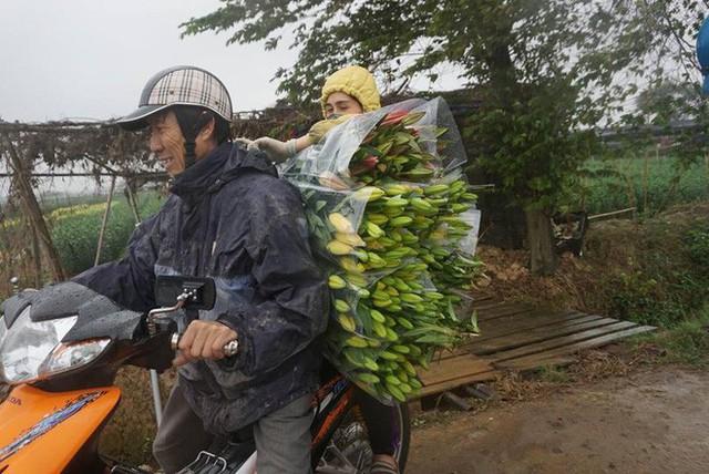Hà Nội: Làng hoa Tây Tựu nở trái mùa, nông dân khóc ròng vì cắm nhà trả nợ - Ảnh 13.