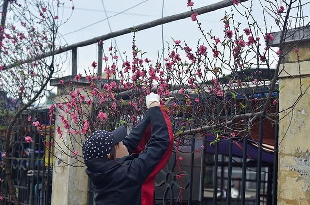 Nhà giàu Hà Nội chi tiền triệu chơi hoa lê rừng sau Tết  Kinh tế - Ảnh 14.