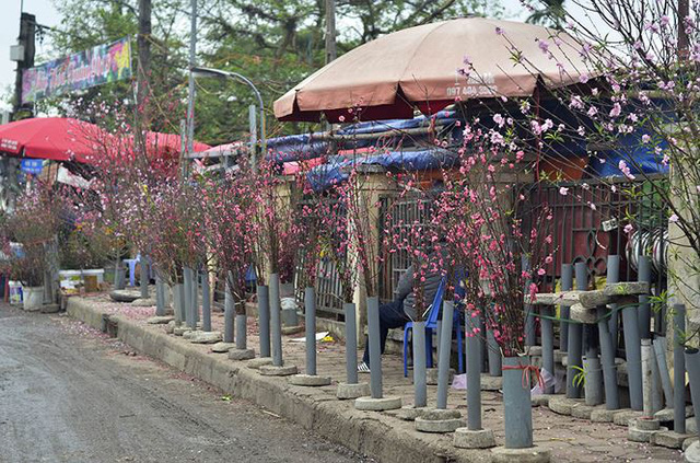 Nhà giàu Hà Nội chi tiền triệu chơi hoa lê rừng sau Tết  Kinh tế - Ảnh 17.