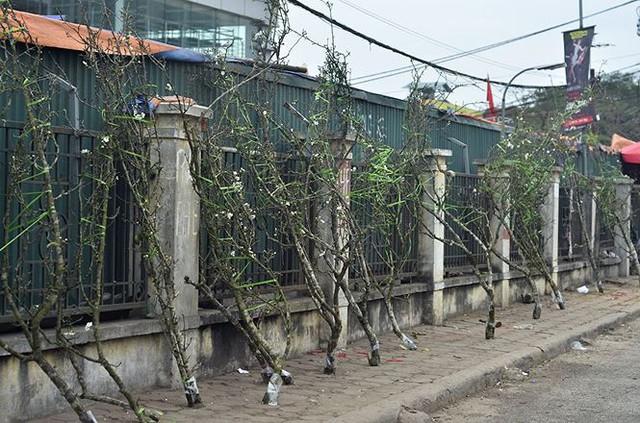 Nhà giàu Hà Nội chi tiền triệu chơi hoa lê rừng sau Tết  Kinh tế - Ảnh 4.