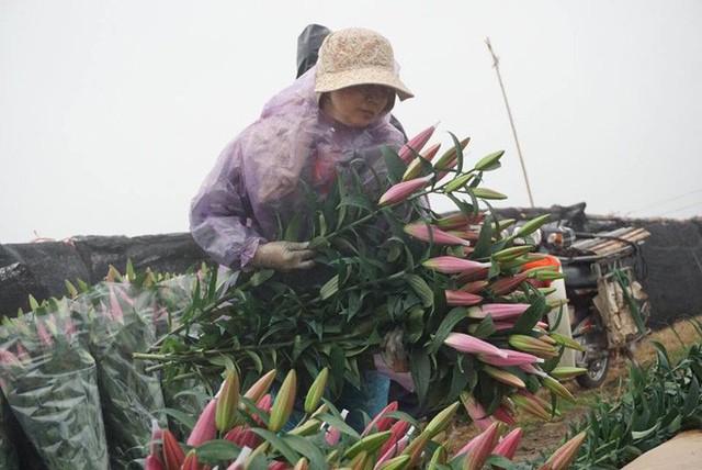 Hà Nội: Làng hoa Tây Tựu nở trái mùa, nông dân khóc ròng vì cắm nhà trả nợ - Ảnh 6.