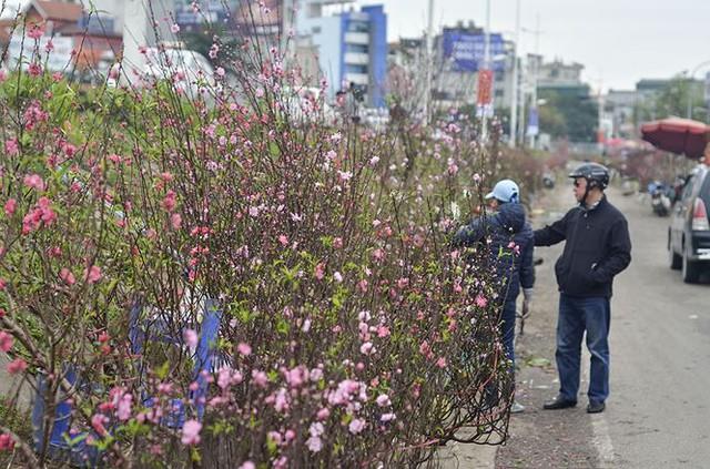 Nhà giàu Hà Nội chi tiền triệu chơi hoa lê rừng sau Tết  Kinh tế - Ảnh 7.