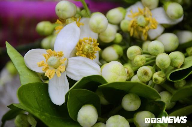 Hoa bưởi đầu mùa, giá tới 300.000 đồng/kg vẫn hút khách Hà Nội - Ảnh 11.