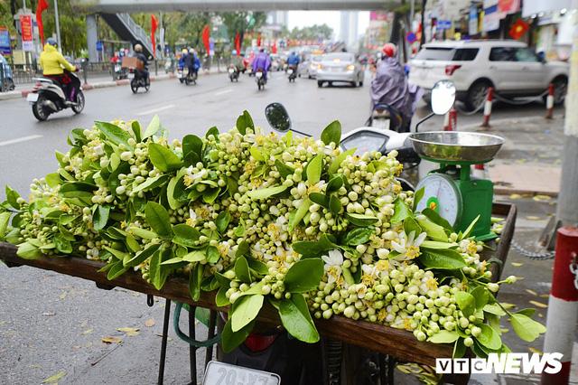Hoa bưởi đầu mùa, giá tới 300.000 đồng/kg vẫn hút khách Hà Nội - Ảnh 3.