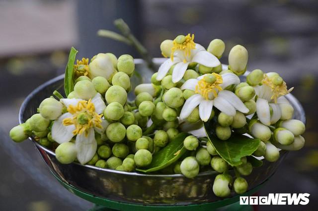 Hoa bưởi đầu mùa, giá tới 300.000 đồng/kg vẫn hút khách Hà Nội - Ảnh 10.