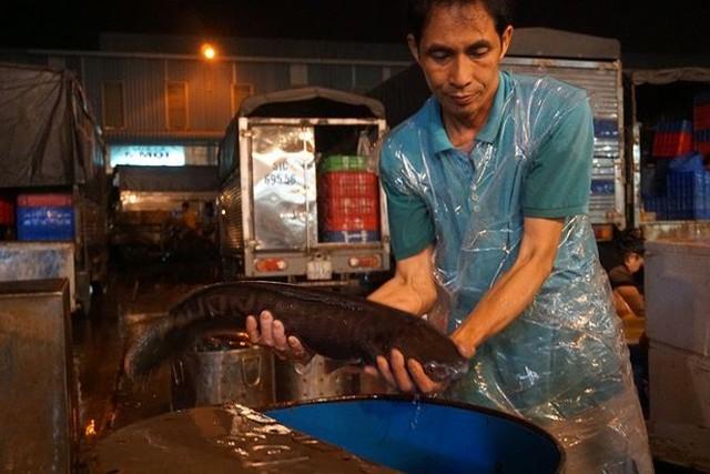 Nhộn nhịp chợ cá lóc trước ngày vía Thần tài   - Ảnh 10.