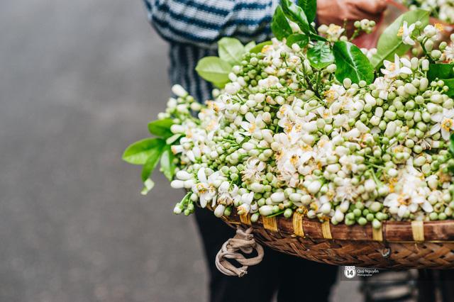 Giữa tiết trời nồm ẩm đầu xuân, có một Hà Nội nên thơ và dịu dàng hương hoa bưởi - Ảnh 1.