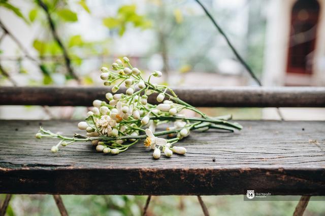 Giữa tiết trời nồm ẩm đầu xuân, có một Hà Nội nên thơ và dịu dàng hương hoa bưởi - Ảnh 12.