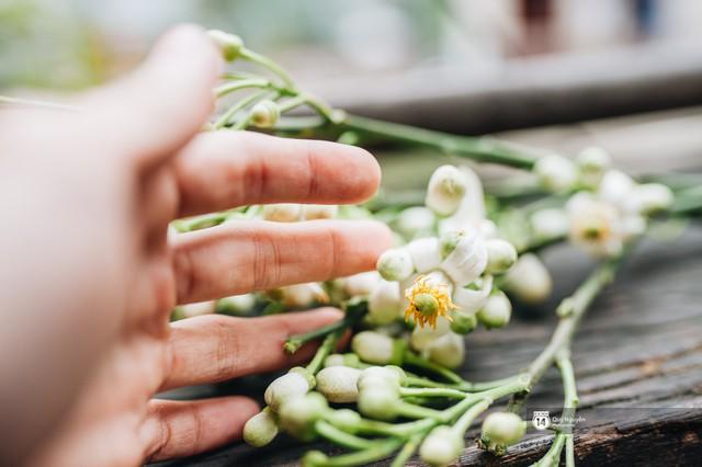 Giữa tiết trời nồm ẩm đầu xuân, có một Hà Nội nên thơ và dịu dàng hương hoa bưởi - Ảnh 13.