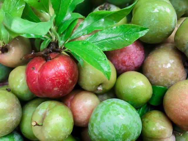 Nông dân Nà Ka thu nửa tỉ mỗi năm từ cây mận - Ảnh 3.