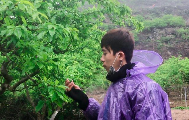 Nông dân Nà Ka thu nửa tỉ mỗi năm từ cây mận - Ảnh 5.