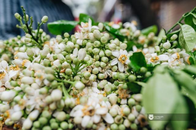 Giữa tiết trời nồm ẩm đầu xuân, có một Hà Nội nên thơ và dịu dàng hương hoa bưởi - Ảnh 9.