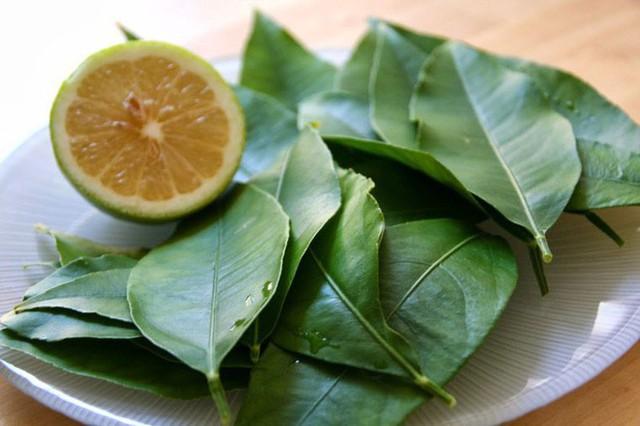 Dắt túi ngay những bài thuốc chữa bệnh từ lá chanh nếu bạn bị cảm sốt, ho do lạnh - Ảnh 2.