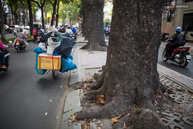 Chùm ảnh: Đường Tôn Đức Thắng trước và sau khi hàng trăm cây xanh bị đốn hạ để phát triển thành phố - Ảnh 12.