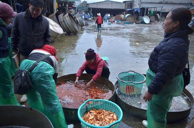 Đỏ rực chợ cá chép lớn nhất Thủ đô trước ngày ông Táo - Ảnh 13.