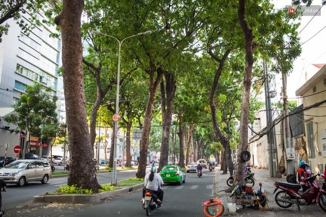Chùm ảnh: Đường Tôn Đức Thắng trước và sau khi hàng trăm cây xanh bị đốn hạ để phát triển thành phố - Ảnh 14.