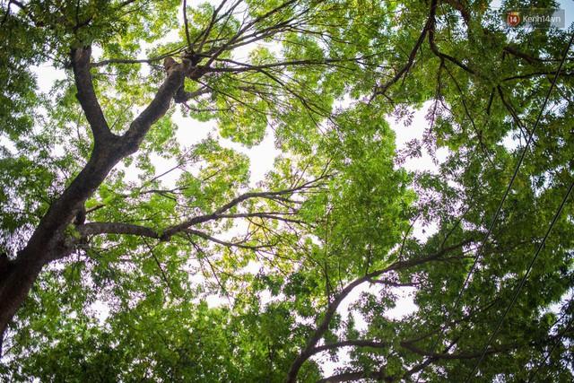 Chùm ảnh: Đường Tôn Đức Thắng trước và sau khi hàng trăm cây xanh bị đốn hạ để phát triển thành phố - Ảnh 16.