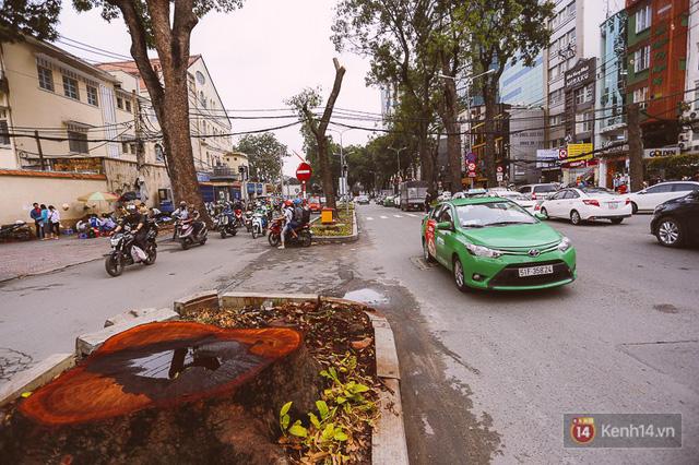 Chùm ảnh: Đường Tôn Đức Thắng trước và sau khi hàng trăm cây xanh bị đốn hạ để phát triển thành phố - Ảnh 20.