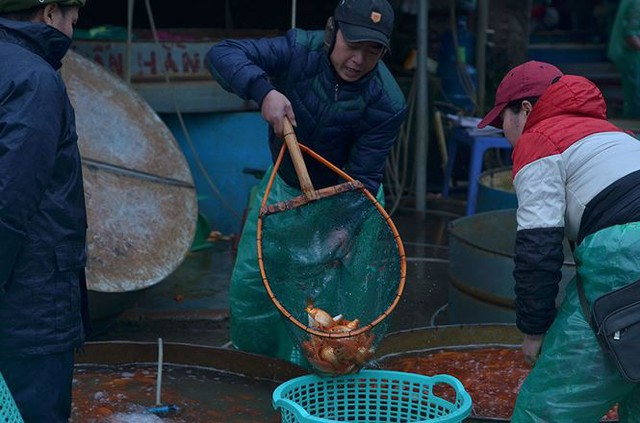 Đỏ rực chợ cá chép lớn nhất Thủ đô trước ngày ông Táo - Ảnh 5.