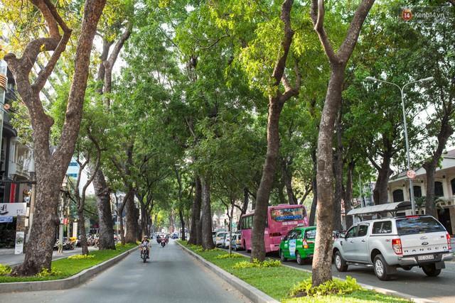 Chùm ảnh: Đường Tôn Đức Thắng trước và sau khi hàng trăm cây xanh bị đốn hạ để phát triển thành phố - Ảnh 6.