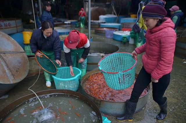 Đỏ rực chợ cá chép lớn nhất Thủ đô trước ngày ông Táo - Ảnh 9.