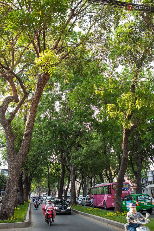Chùm ảnh: Đường Tôn Đức Thắng trước và sau khi hàng trăm cây xanh bị đốn hạ để phát triển thành phố - Ảnh 10.