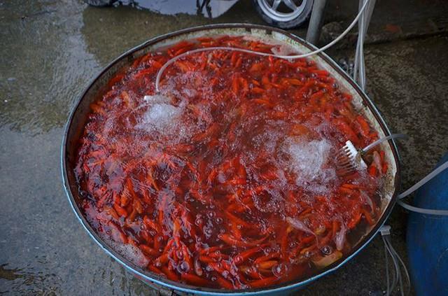 Đỏ rực chợ cá chép lớn nhất Thủ đô trước ngày ông Táo - Ảnh 10.