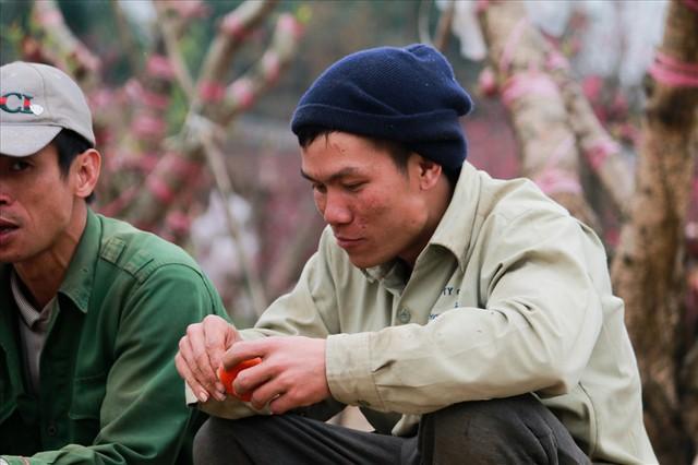 Nông dân đi đánh gốc đào thuê: Mỗi ngày kiếm tiền triệu - Ảnh 7.