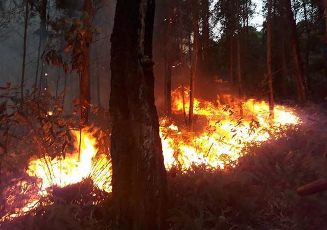 Ngày cúng ông Công, ông Táo, Quảng Ninh liên tiếp xảy ra 2 vụ cháy rừng lớn - Ảnh 1.