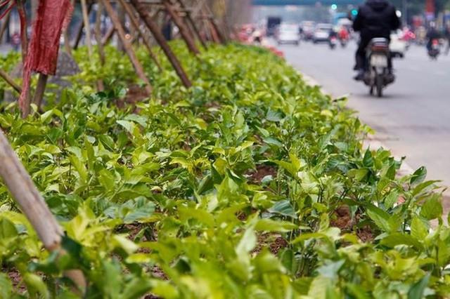 Ngắm đường 10 làn xe đẹp nhất Việt Nam tại Hà Nội - Ảnh 6.
