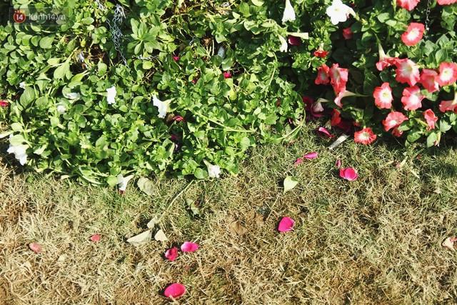 Hình ảnh xấu xí tại lễ hội hoa hồng Bulgaria: Người dân trèo rào, kéo hoa bất chấp để chụp ảnh - Ảnh 17.