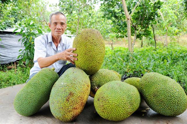 Mít Thái tăng giá kỷ lục - Ảnh 1.