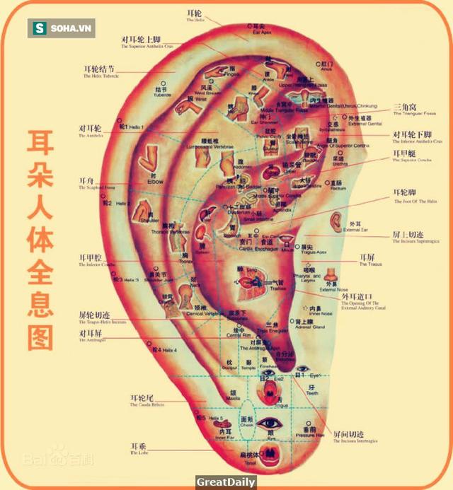 Xoa vuốt tai trong 10 phút: Tác dụng kỳ diệu từ đầu đến chân, thông máu, sạch nội tạng - Ảnh 1.