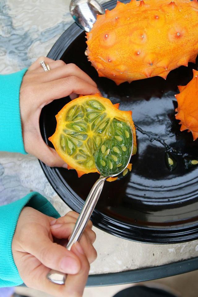 Loại dưa đầy gai vị giống kiwi có giá 400k/quả ở Việt Nam có gì đặc sắc - Ảnh 12.