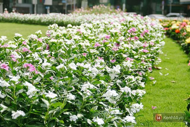Bãi giữ xe bỏ hoang phía sau Nhà hát TP. HCM đã biến thành vườn hoa xanh ngát - Ảnh 3.