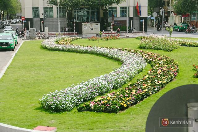 Bãi giữ xe bỏ hoang phía sau Nhà hát TP. HCM đã biến thành vườn hoa xanh ngát - Ảnh 4.