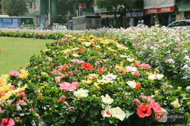 Bãi giữ xe bỏ hoang phía sau Nhà hát TP. HCM đã biến thành vườn hoa xanh ngát - Ảnh 7.