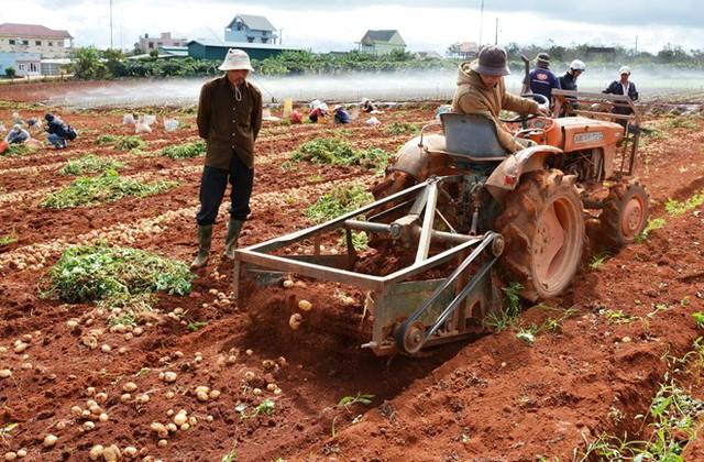 """Nông dân """"méo mặt"""" vì nông sản rớt giá  - Ảnh 1."""